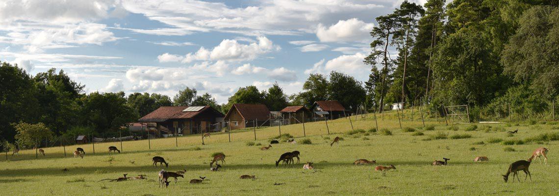 Erlebnis Bauernhof Schmid in Waldmössingen
