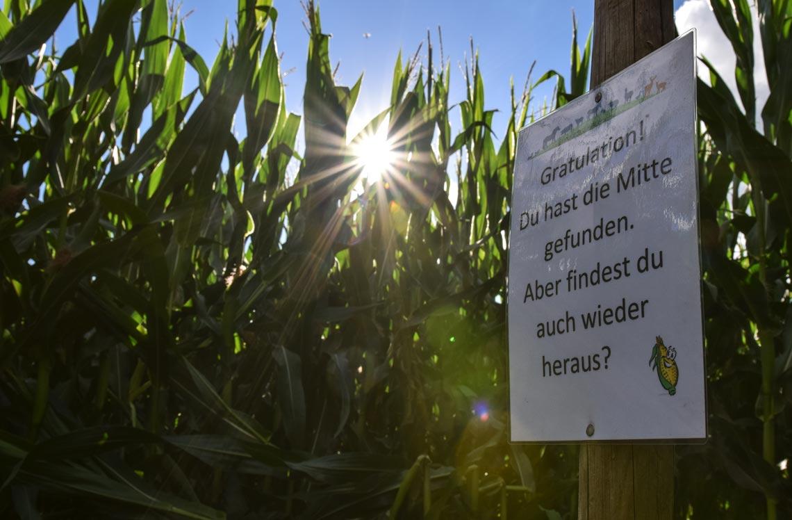 Mittelpunkt des Maislabyrinths