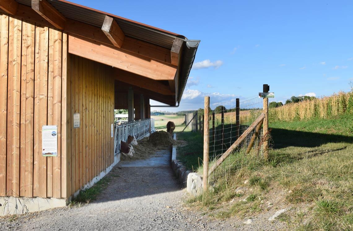 Erlebnis Bauernhof Kuhstall