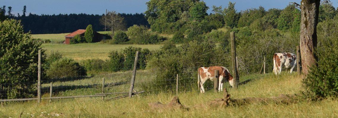 Erlebnis Bauernhof Gehege