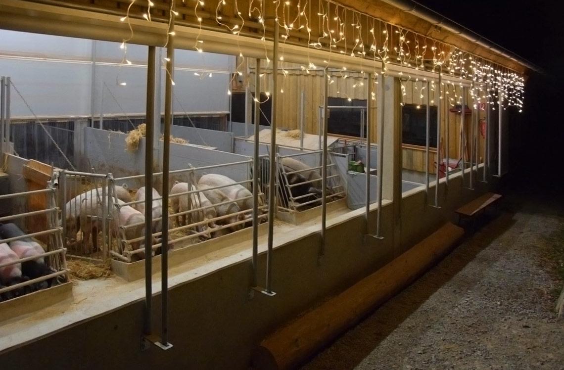 erleuchteter Schweinestall Erlebnis Bauernhof Waldmössingen
